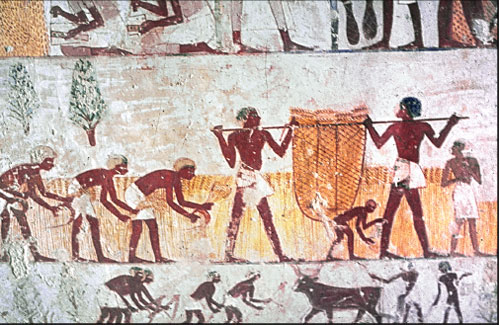 Egyptian workers harvesting grain and carrying it away to be threshed. Tomb of Mena, Thebes, ca. 1420 B.C. ABR File photo.