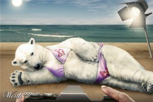 polar bear funny pictures (1)