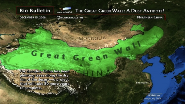 The Great Green Wall is due to be completed in 2050, and is expected to contain more than 100 billion trees in band covering more than one-tenth of China.