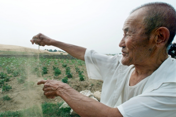 (Photo : Reuters) After decades of growth and patience, a massive swath of trees planted across bone-dry northern China nearly 40 years ago is finally starting to reverse the desertification of the region.