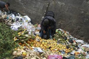 A man picks up oranges at the garbage dump of the La Terminal food centre, one of the largest food markets in Guatemala City February 27, 2015. REUTERS/Jorge Dan Lopez
