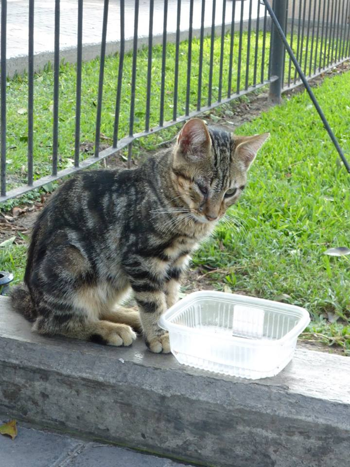 One of the many feral cats we met on our trip so far.