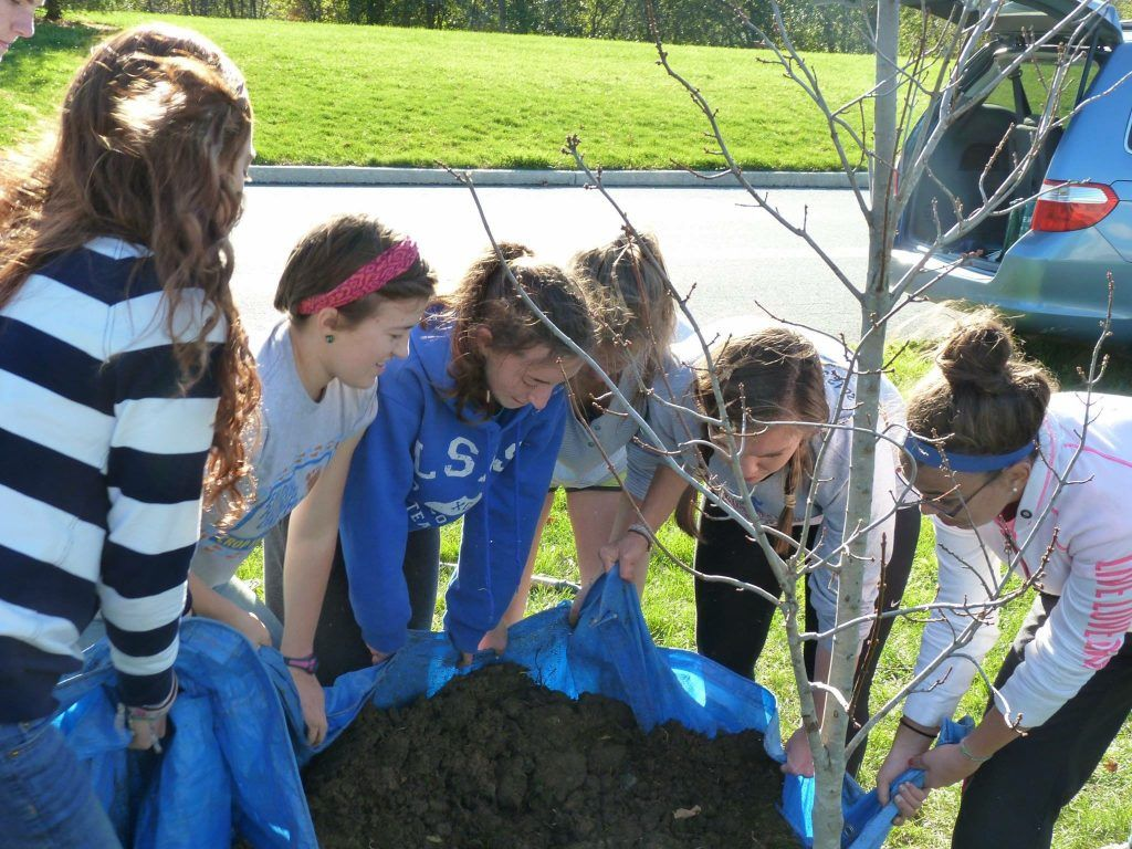 In the spirit of tree planting - my high school's environmental club planting Shady the Sun Valley Maple tree